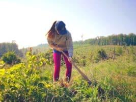 GEFCO pomáhá obnově lesa po kalamitě