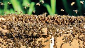 Komerční banka se pustila do produkce medu