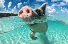 Fio banka ukazuje další Dobré zvyky zvířat